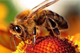 Wiesci dni pszczelarza 2013